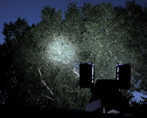Command Light, C-Light Series, LED Light Tower, Fire Truck Lights, C-Light shining light in tree